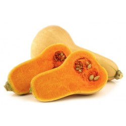 Courge butternut (France)