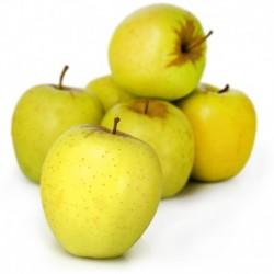 Pomme Golden (France)