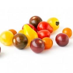 Tomate cerise de couleur (Espagne)