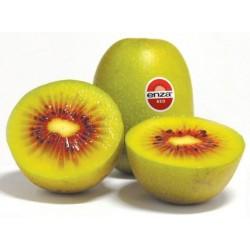 Kiwi rouge (Import)